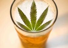 ENGINEERING WITH EXOTIC INGREDIENTS: KEY CONSIDERATIONS FOR CANNABIS BREWERS